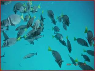 School of fish on a scuba diving trip during the summer 2014 trip to the Galapagos Islands. Photo courtesy of Tonya Huff and Virginia White
