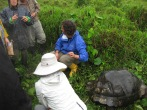 Students receiving instruction for wild tortoise monitoring in Santa Cruz Island. Photo courtesy of Tonya Huff and Virginia White